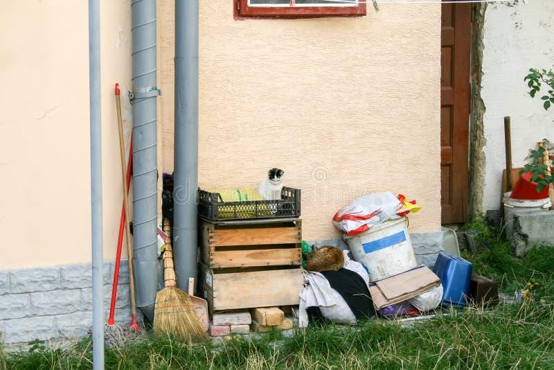 Сброс около стены дома ведер, сумок, веников, mops, старых вещей и клетей в которых сон котов стоковое фото rf