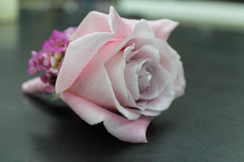 Свадебная пурпурная роза из бутоннира стоковое фото rf