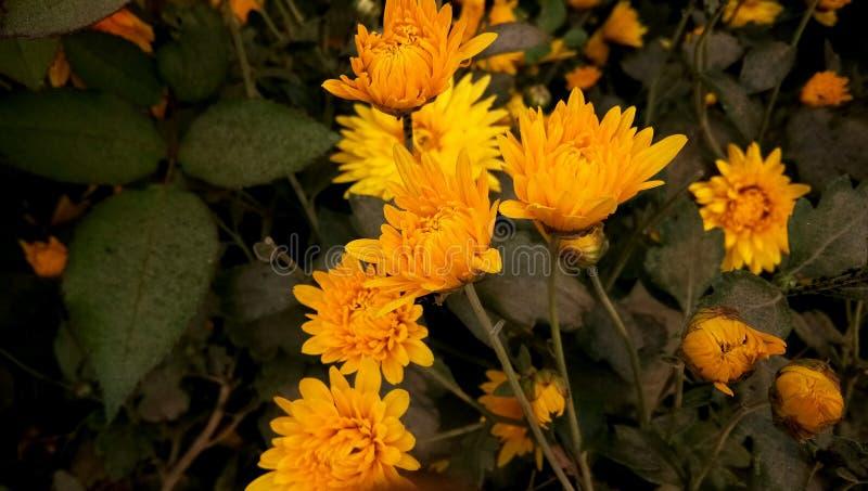 Свадьба подняла цветок в саде стоковые изображения
