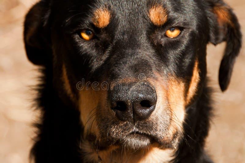 Сварливая сторона собаки стоковые изображения