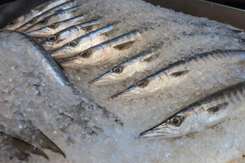 Свежая барракуда на рыбном базаре стоковое фото rf