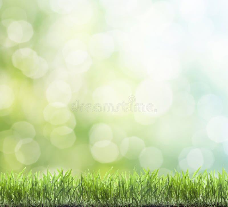 свежая весна зеленого цвета травы стоковое изображение