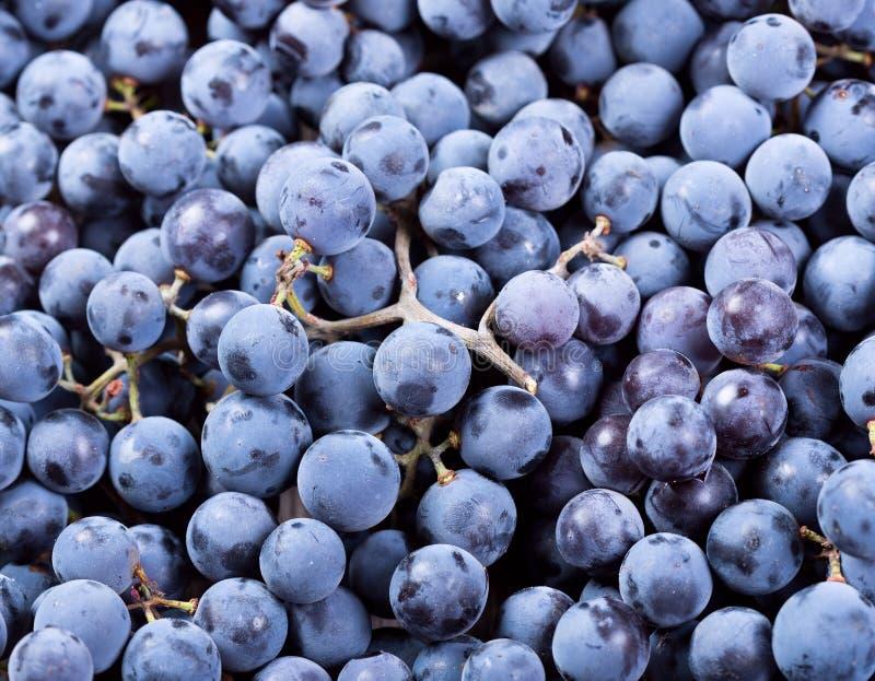 свежая виноградина стоковое изображение