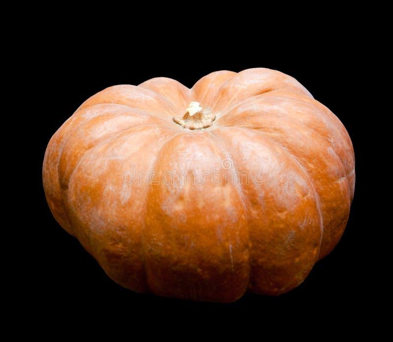 Свежая жизнь pumpkin.still на черной предпосылке стоковые изображения
