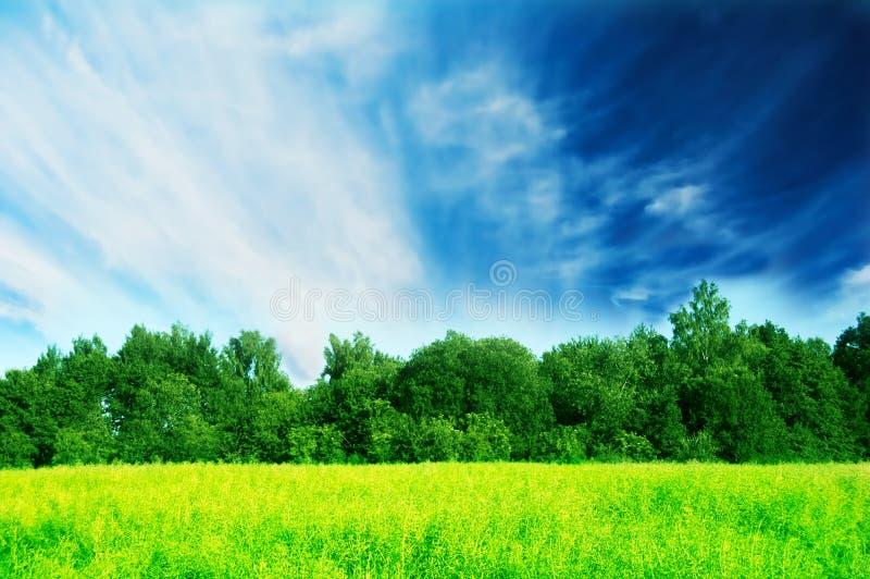 свежая зеленая весна ландшафта стоковые изображения rf
