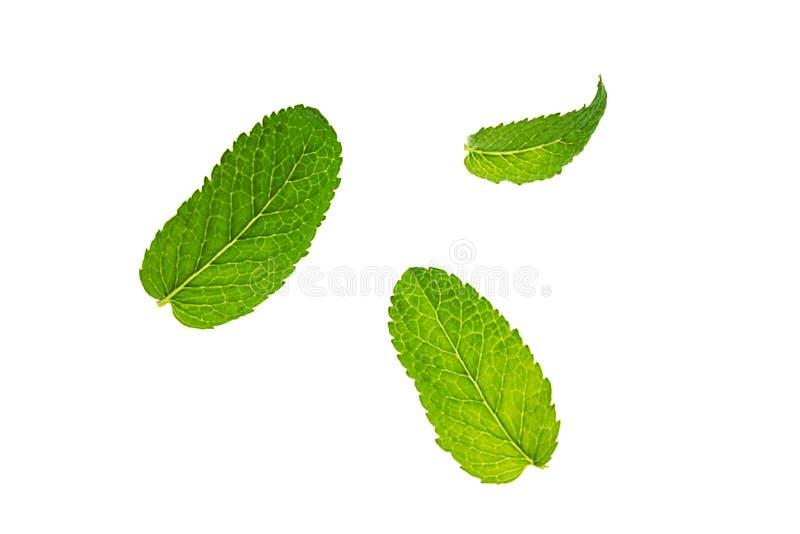 Свежая зеленая картина листьев мяты или mentha изолированная на белой предпосылке стоковое изображение rf