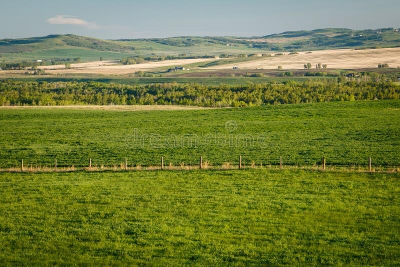 Свежая зеленая сельская местность южной Альберты, провинции Канады стоковое изображение rf