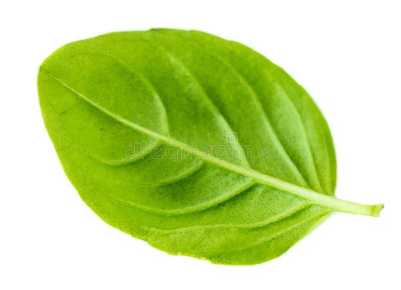 Свежая зеленая трава лист базилика изолированная на белой предпосылке, верхней части стоковое изображение rf
