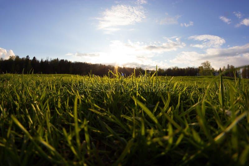 Свежая зеленая трава на поле стоковое фото
