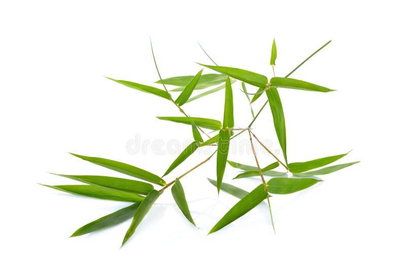 свежая зеленая бамбуковая ветвь с листьями на белой предпосылке стоковая фотография