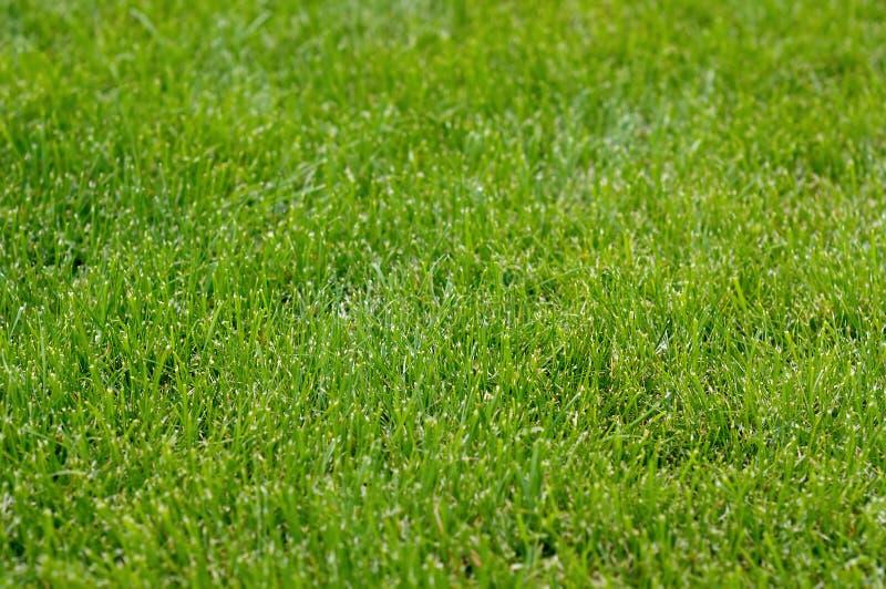 Download Свежая зеленая трава стоковое фото. изображение насчитывающей лужайка - 37931984