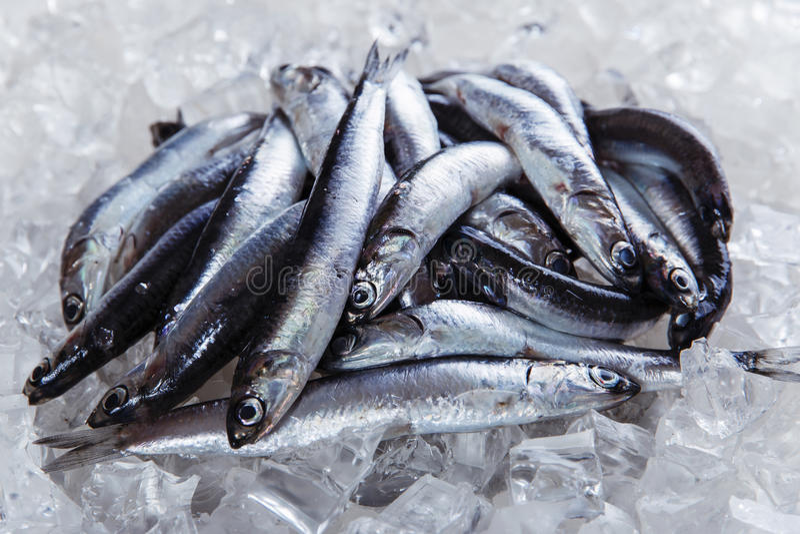 Свежая камса сырых рыб на льде стоковое фото rf