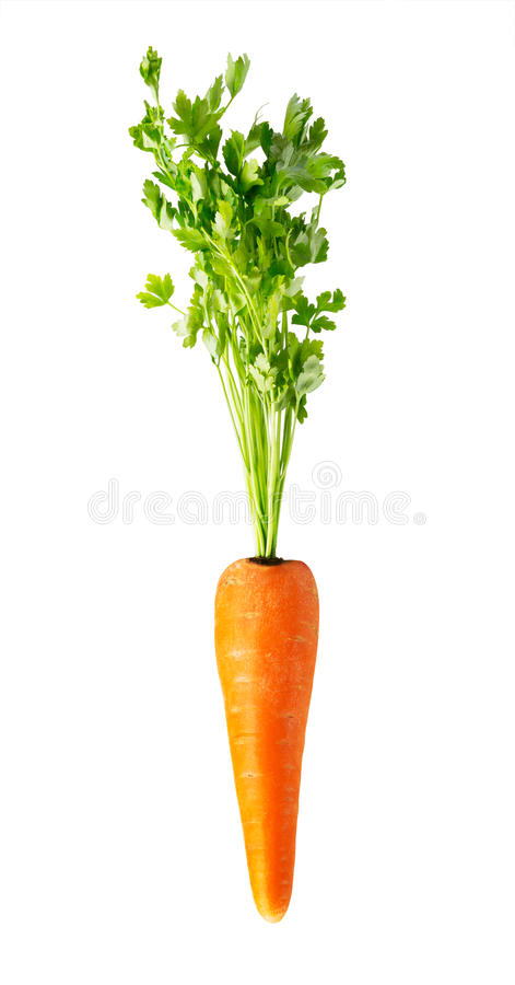 Download Свежая красная морковь на белизне Стоковое Изображение - изображение насчитывающей хлебоуборка, группа: 37925595
