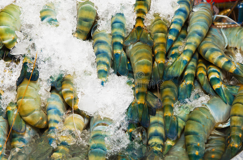 Свежая креветка, Таиланд стоковое фото