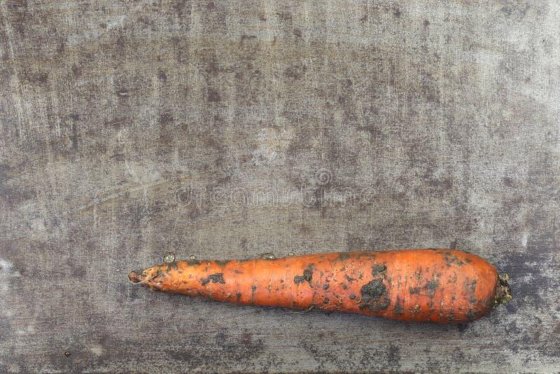 Свежая морковь зимы стоковое изображение rf