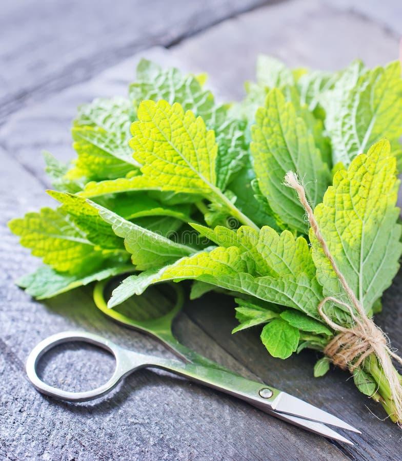 Download свежая мята стоковое изображение. изображение насчитывающей листья - 41659505