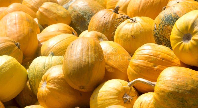 Свежая оранжевая тыква изолированная на предпосылке стоковые изображения rf