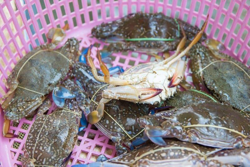 Свежая подсказка синего краба сверх на корзине на рынке морепродуктов стоковая фотография
