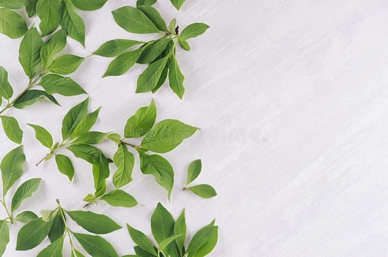 Свежая предпосылка весны - зеленая листва на доске мягкого света белой деревянной, взгляд сверху, космосе экземпляра стоковые изображения