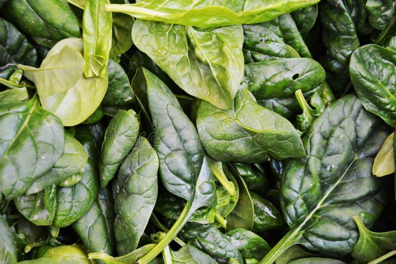 Свежая предпосылка овоща шпината стоковые изображения rf