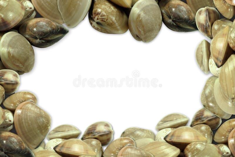 Свежая предпосылка clams стоковое фото