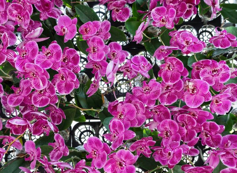 Свежая розовая орхидея в пластиковой строке бака стоковые фотографии rf