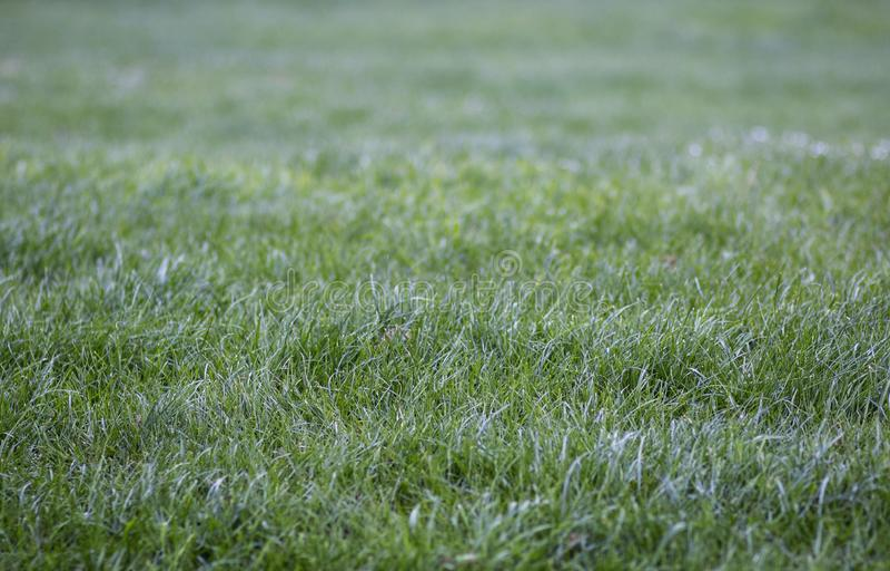 Свежая роса на красивой молодой зеленой траве стоковая фотография