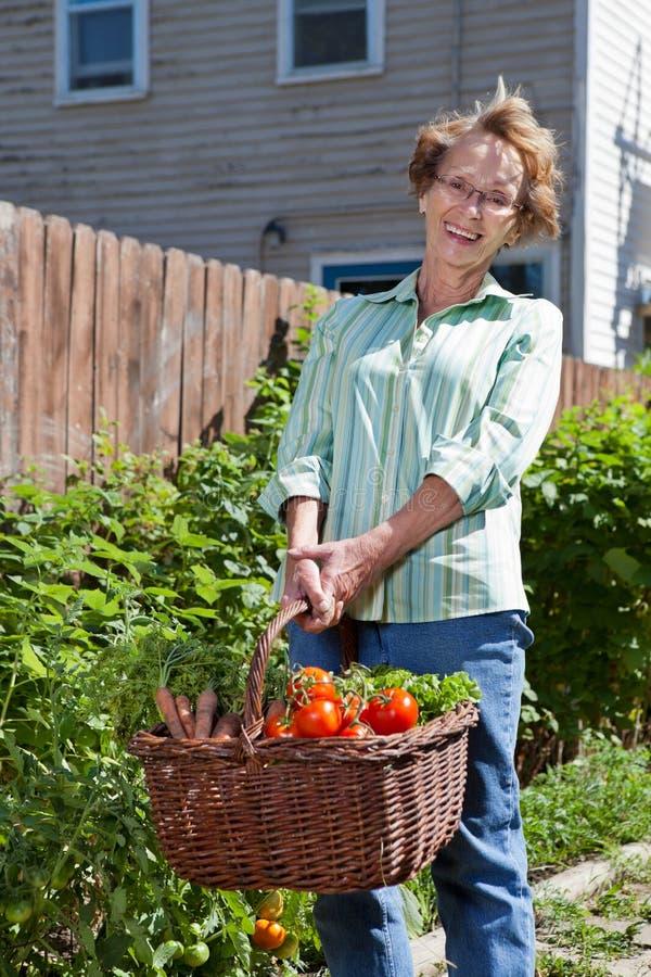 свежая счастливая старшая женщина овощей стоковая фотография rf