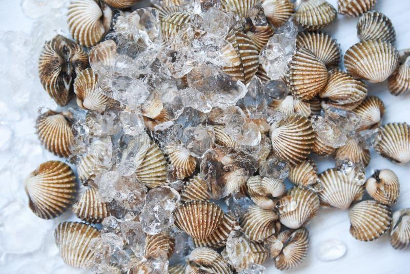 Свежая сырцовая предпосылка льда seafoodon куколя крови моллюска - гурман океана в ресторане стоковая фотография