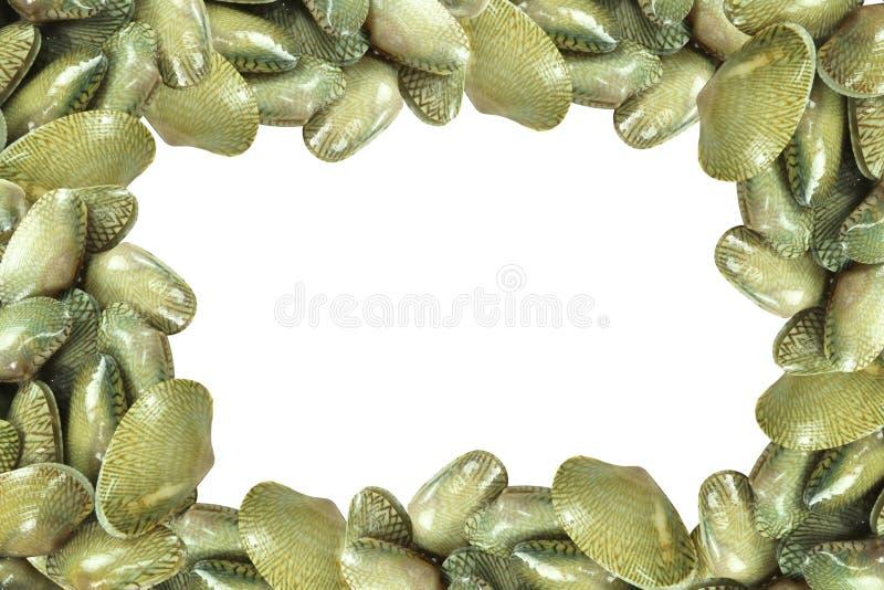 Свежая сырцовая рамка clam прибоя стоковые изображения rf