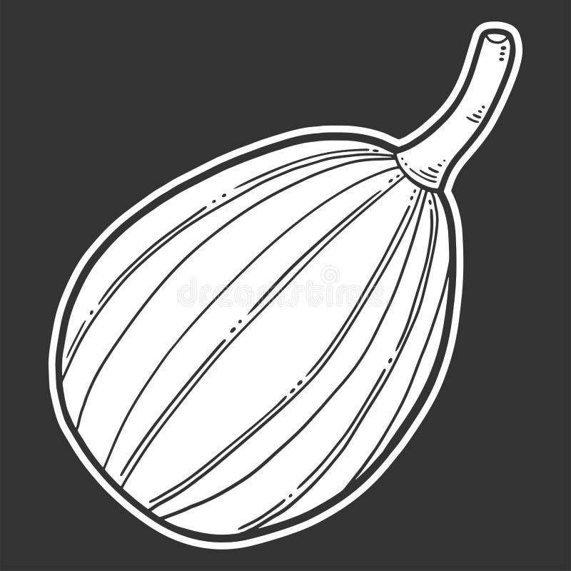 Свежая сырцовая тыква Концепция вектора в стиле doodle и эскиза иллюстрация вектора