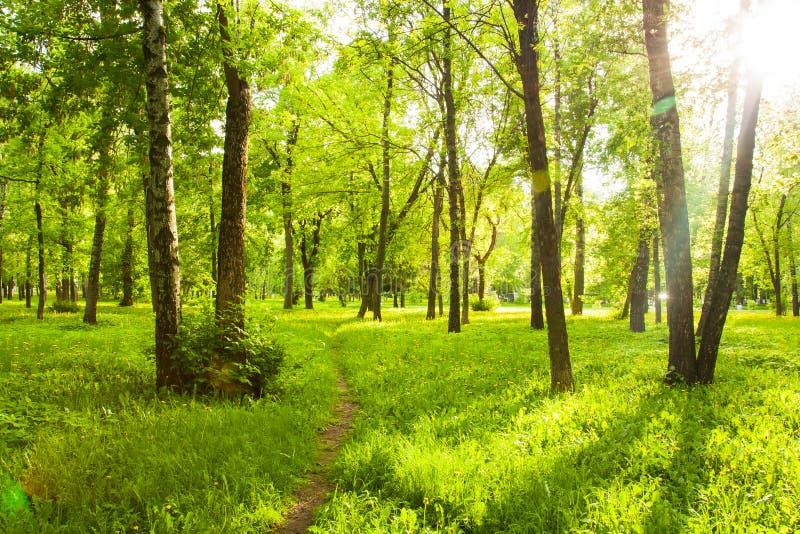 Свежая трава с одуванчиками, деревьями с зелеными листьями под Shini стоковое фото