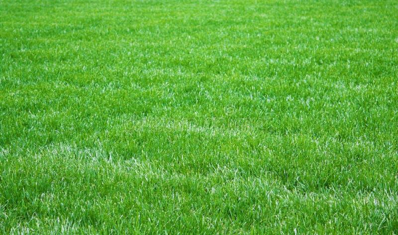 Свежая трава стоковое фото rf