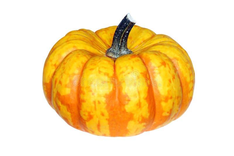 Свежая тыква оранжевого желтого цвета залатанная стоковые фото