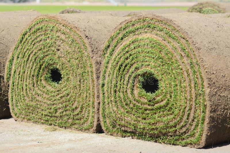 Свежая rolled-up дерновина травы стоковые фотографии rf