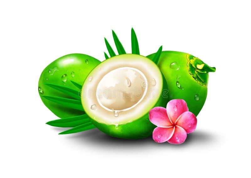 Свежее желание Юго-Восточная Азия зеленого цвета кокоса бесплатная иллюстрация