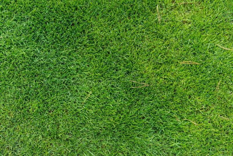 Свежее зеленое взгляд сверху травы луга стоковые изображения rf