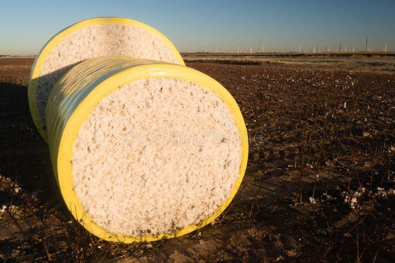 Свежее земледелие Техаса поля фермы хлопка сбора поруки стоковая фотография