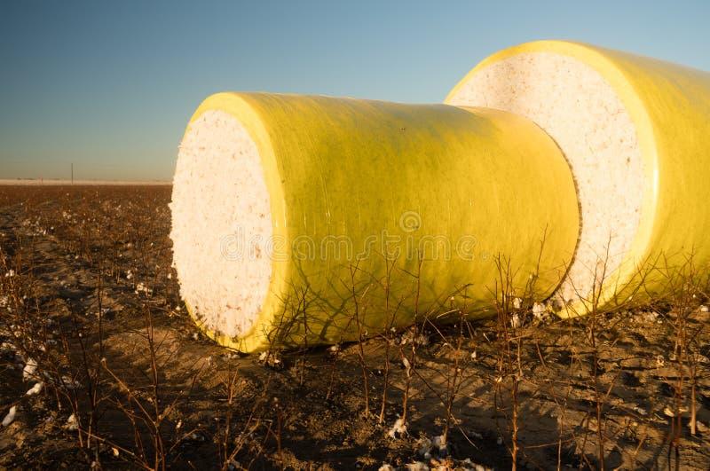 Свежее земледелие Техаса поля фермы хлопка сбора поруки стоковые фото