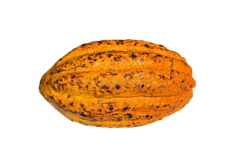 Свежее какао какао стоковая фотография