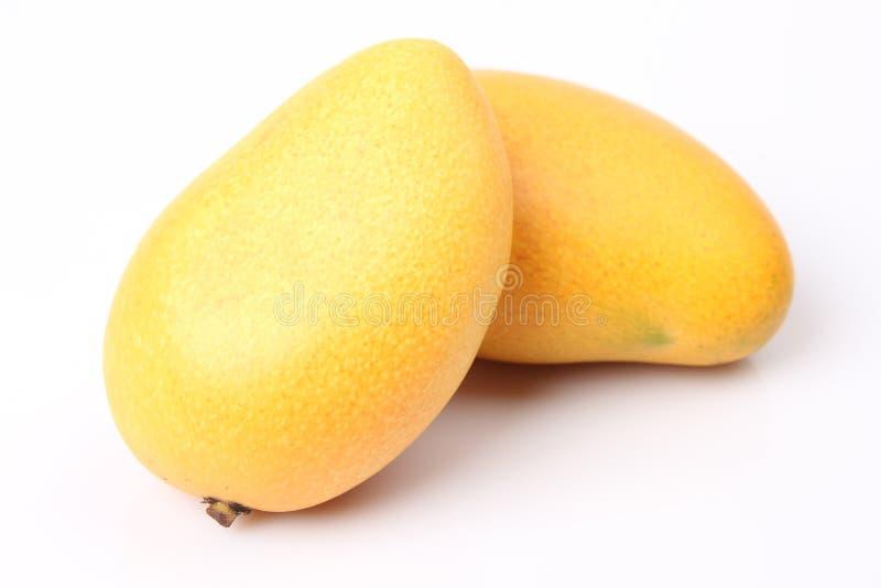 Свежее манго стоковые фото