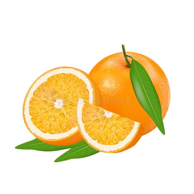 Свежее оранжевое все и куски апельсинов и лист изолированных на белой предпосылке иллюстрация штока