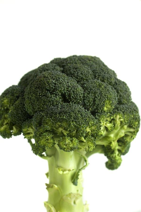 Свежее brocoli стоковое фото rf