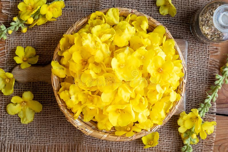 Свежее mullein цветет в плетеной корзине, взгляд сверху стоковые изображения