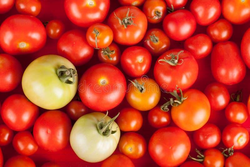 Свеже выбранные красные томаты в коробке плюс зеленый цвет 2 стоковая фотография