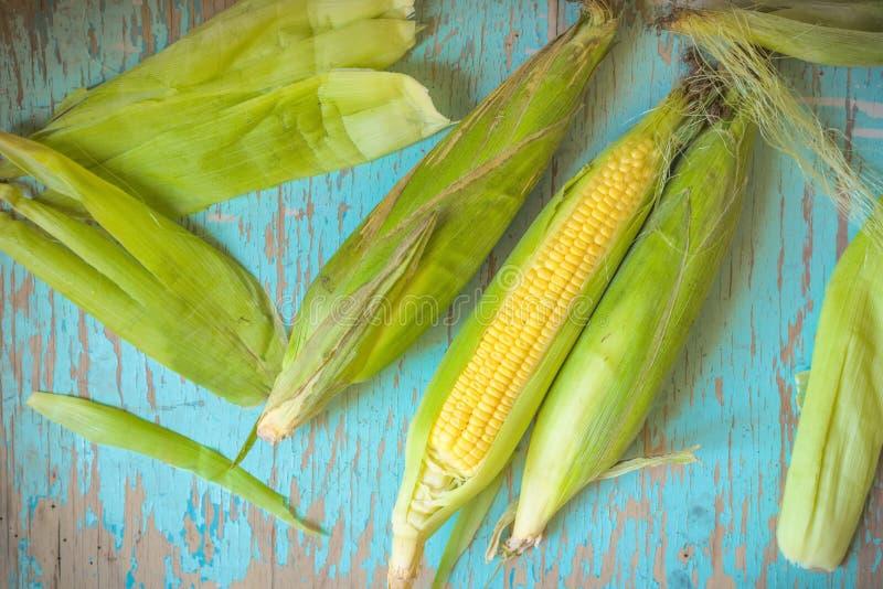 Свеже выбранный кукурузный початок, сладостный удар маиса стоковое изображение