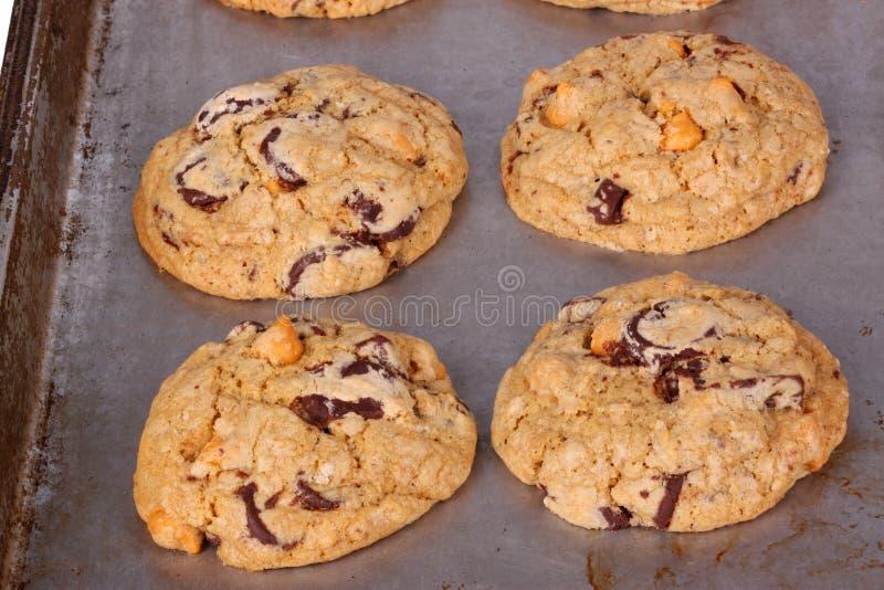 Свеже испеченный, самодельный шоколад и butterscotch откалывают печенья стоковые фотографии rf
