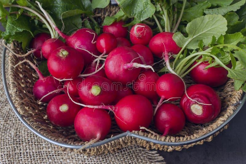 Свеже сжатая красочная редиска растущая редиска растущие овощи стоковые фотографии rf
