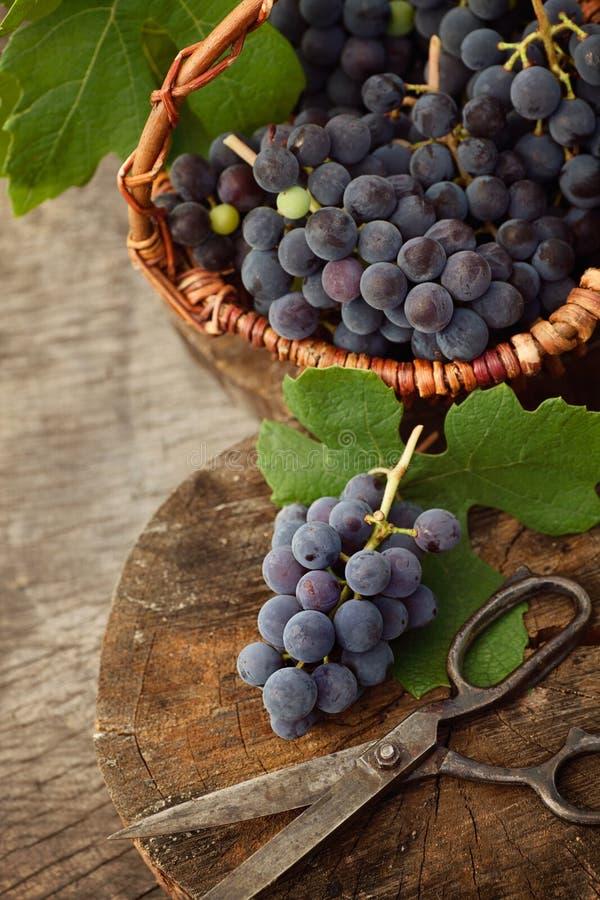 Download свеже сжатые виноградины стоковое изображение. изображение насчитывающей органическо - 40580281