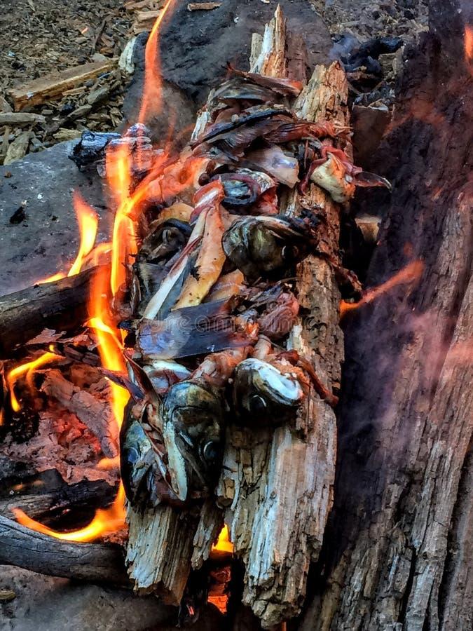 Свеже уловленные сила воли, кабели и головы форели горя в лагерном костере стоковые фото